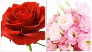 mùi hoa hồng